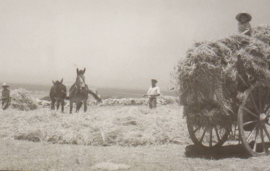 MalDia Farmers toiled from dawn to dusk in the past