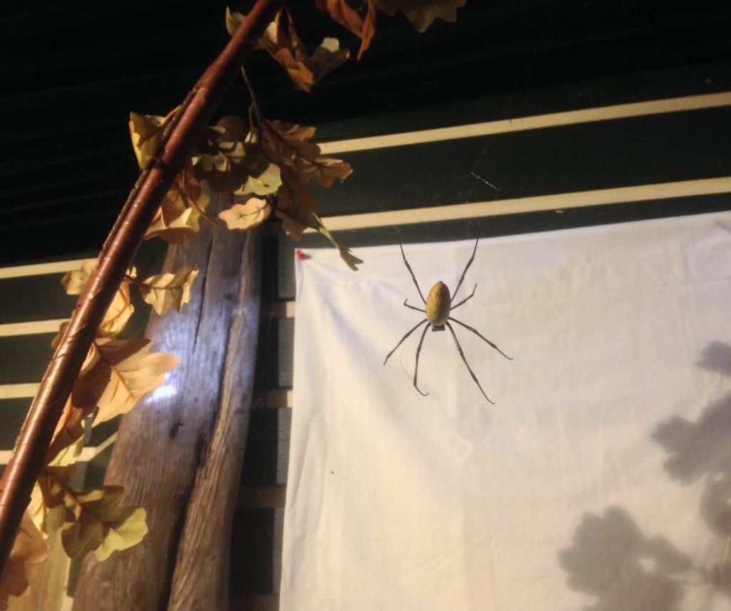 Pic Orb Web Spider