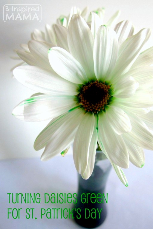 Simple Science – Green Daisies for St. Patrick's Day