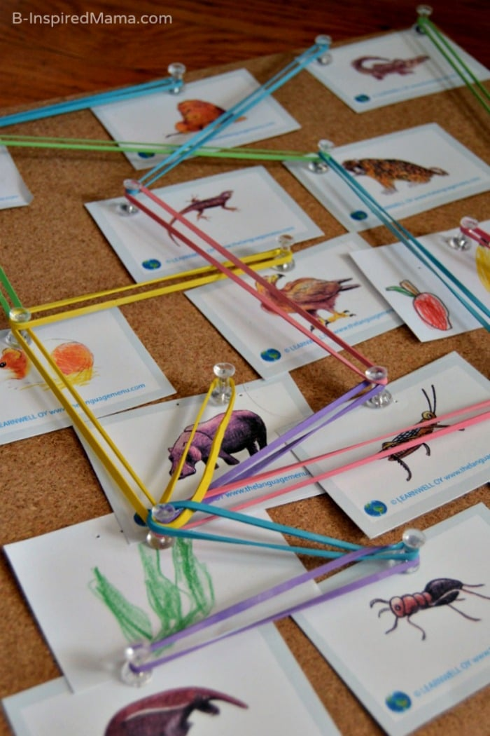 Our Hands on Food Web Board - Science for Kids at B-Inspired Mama