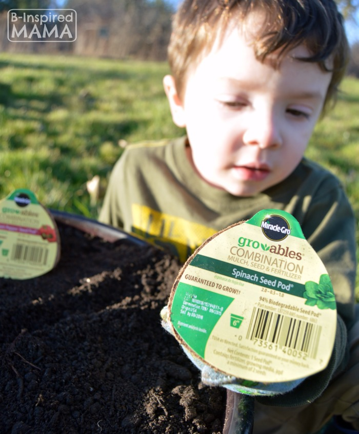 Planting a Pizza Garden in a DIY Pizza Garden Planter - Checking out our Miracle-Gro Gro-ables - at B-Inspired Mama