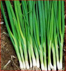 manfaat bawang daun