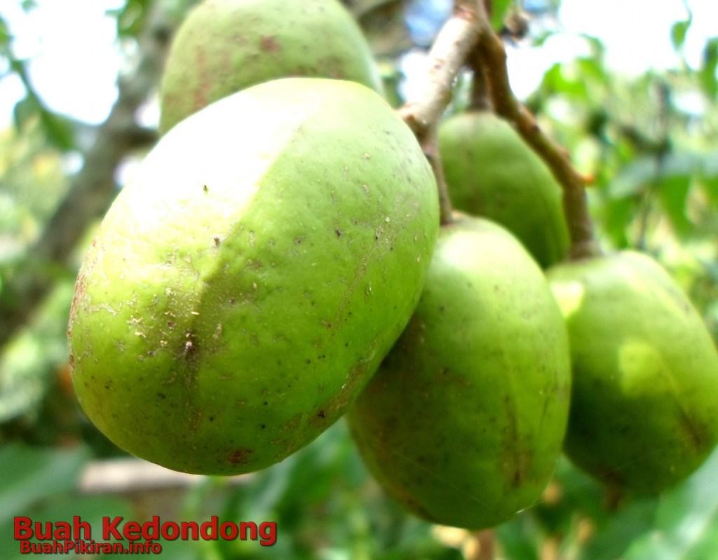 buah kedondong