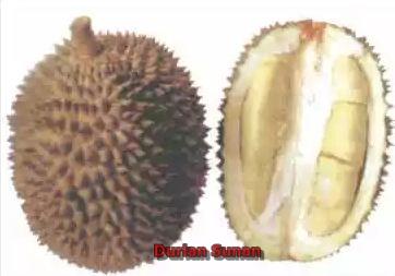 jenis durian yang terkenal