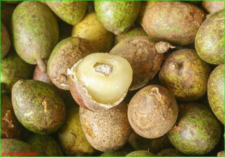 jenis dan manfaat buah matoa