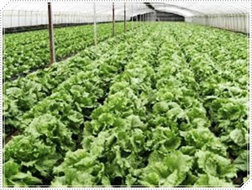 contoh tanaman organik