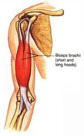 bicep pain