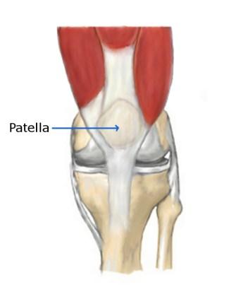 knee pain clicking