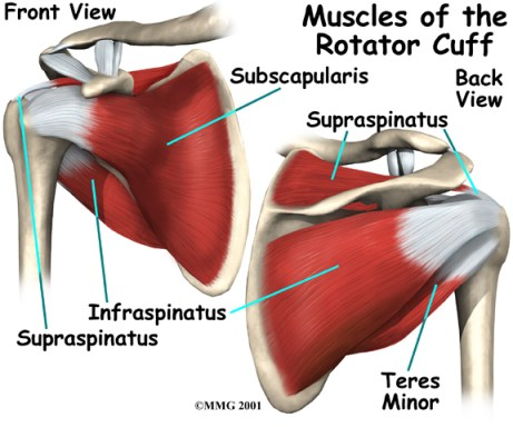 training the rotator cuff