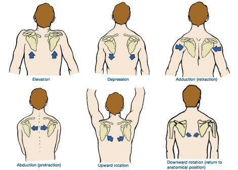 Shoulder scapular motions