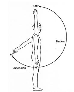 Shoulder flexion and extension