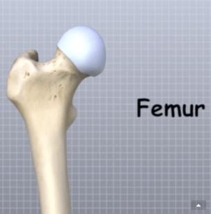 Femur Anatomy