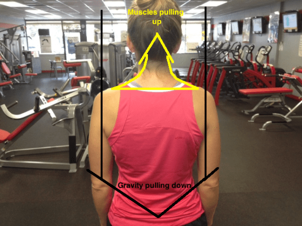 Shoulders level back view resized with lines