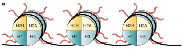 closer up histone and dna with tails