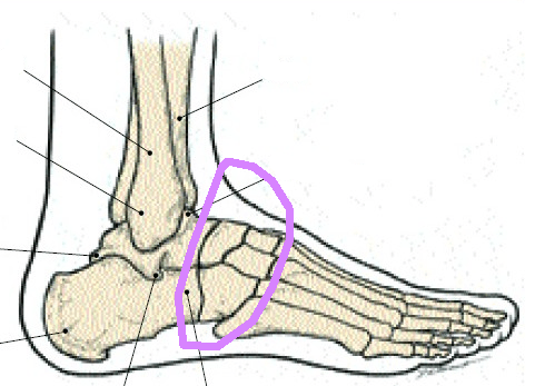 Ankle bones sprain circle foot