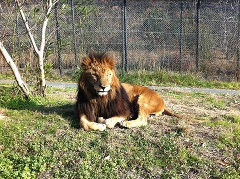 姫センのライオン (2)