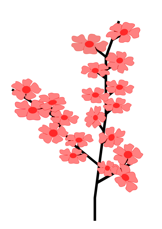 Cherry Blossom Svg : cherry, blossom, Plant,Flower,Petal, Clipart, Royalty