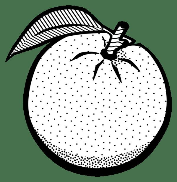 drawing orange juice line art fruit