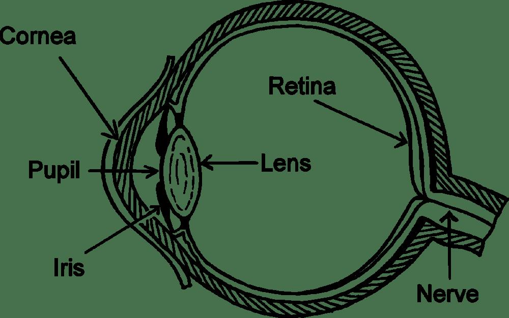 medium resolution of wiring diagram eye pattern drawing