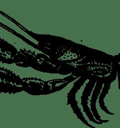 crab lobster decapods animal m 02csf [ 1599 x 750 Pixel ]