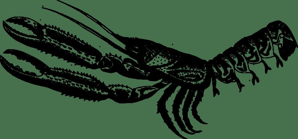 medium resolution of crab lobster decapods animal m 02csf