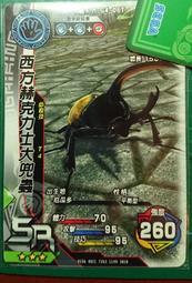 甲蟲王者 - 露天拍賣