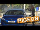 Pigeon Poop Prank (Remi Gaillard)