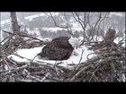 MnrH2Y9lWPYv6 u6rg3gA8Mh4UOcJsfTFe5YjuF9NU - Climate Change confuses Eagle mother fighting to keep her eggs warm