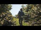 8Nk4RH95NlGQ0vZFR0dQCfAYUL4IqWhUWX cbQTh5Jk - Netflix - Kiss the Ground Film Trailer (2020)