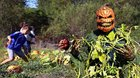 Ha ha pumpkin patch pranking video