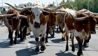 IoT Devices Are Cattle, Not Pets. Manage them accordingly.