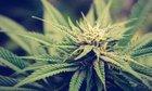Rhode Island Republican House Leader Embraces Marijuana Legalization
