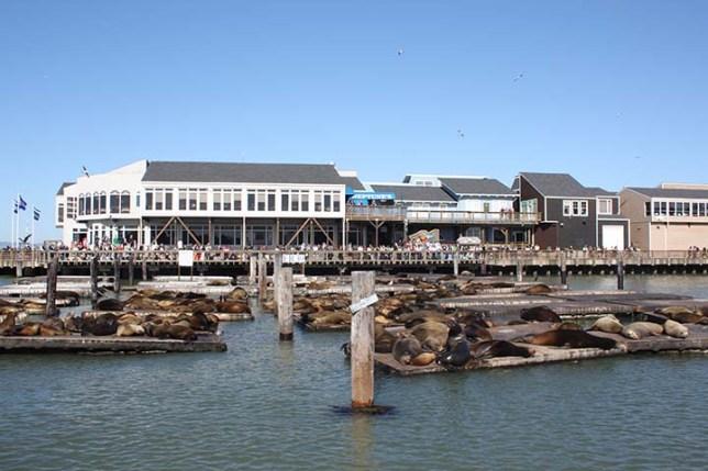 sea lion at Pier39 in San Francisco
