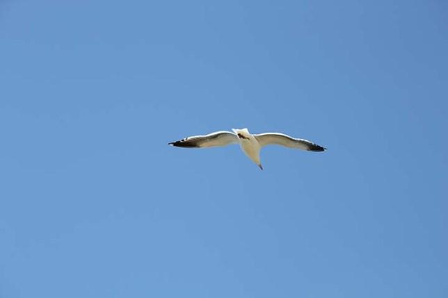 A seagull at Alcatraz Island