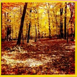 Autumn Leaves Number 2059