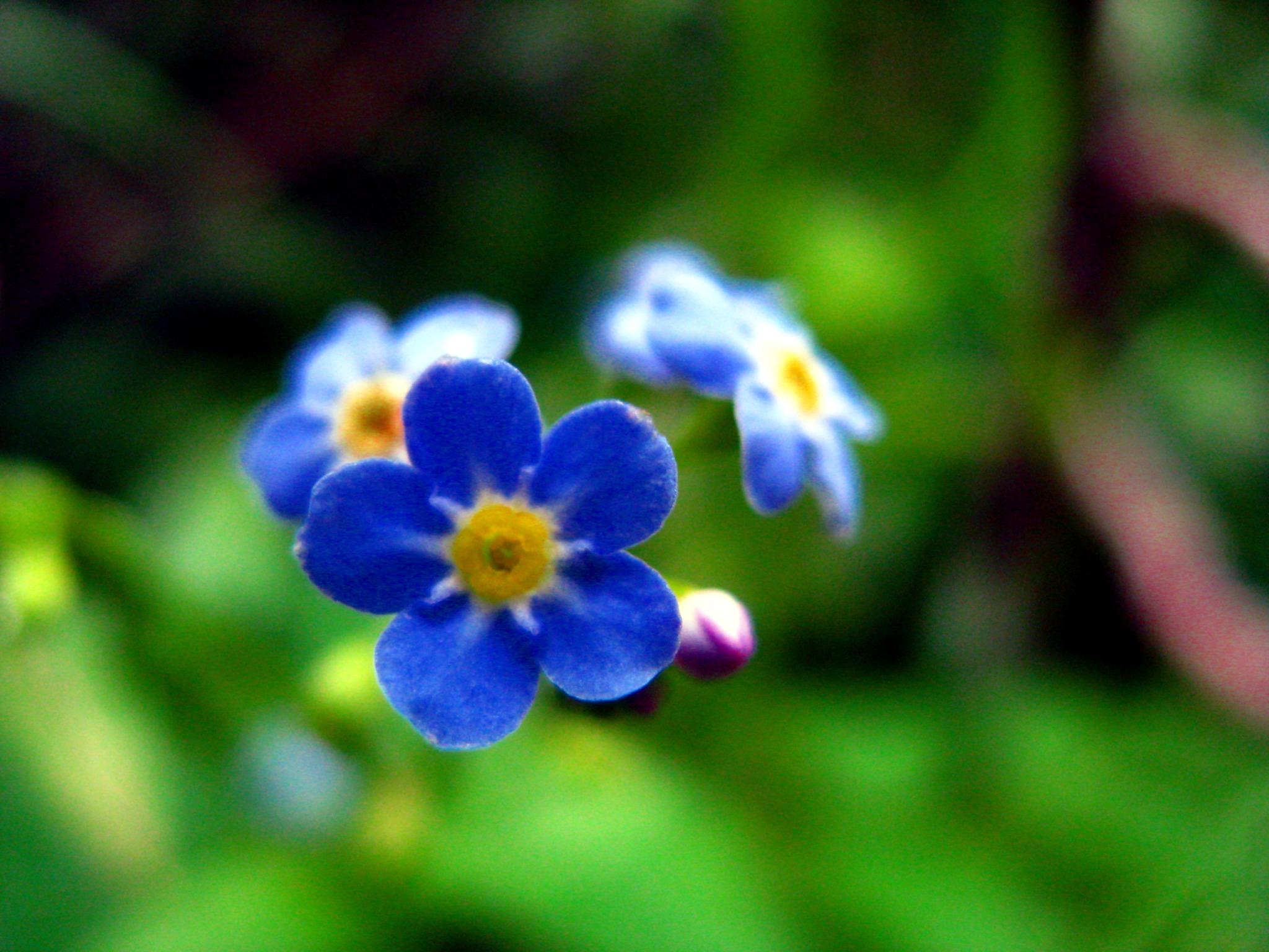 haruna aoki wetland flowers