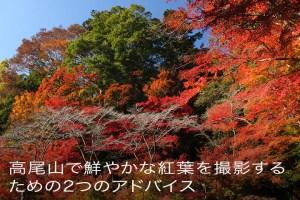 高尾山で鮮やかな紅葉を撮影する