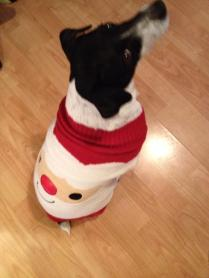 Joanne Lowry sent this of Bob the Dog waiting to open his Advent Calendar! :)