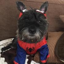 Marvel fan, Milo, from Northfield