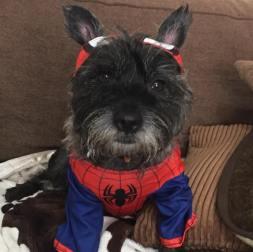 Marvel fan, Milo, from Northfield