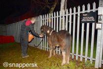 Stevie's rescuer gaining his trust...