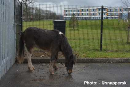 Stevie was left tied to a fence at Shenley Academy