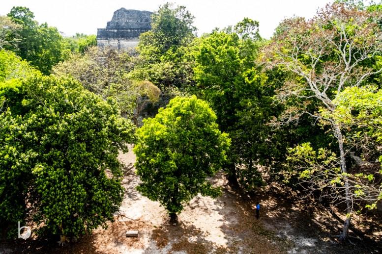 Cormoranes y selva.