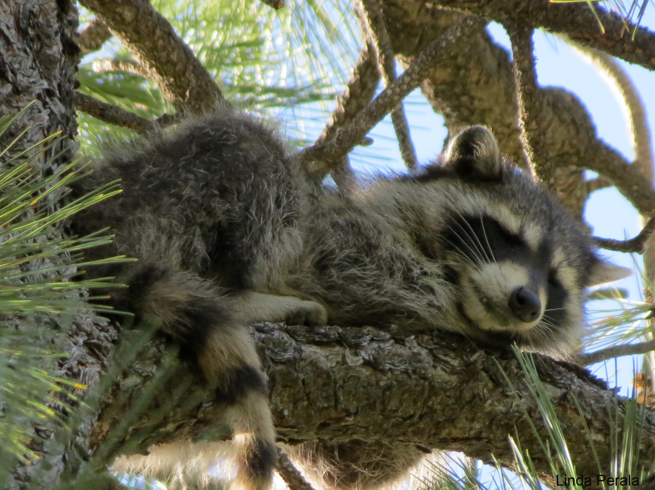 Sleeping Animals That Are As Shutdown As The Government