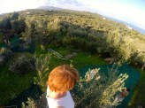 View from the top of an olive tree.
