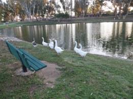 Tri-Cities-Park-natasha-kent-buckley (2)
