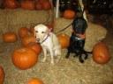Pumpkin Patch 2015 (16)