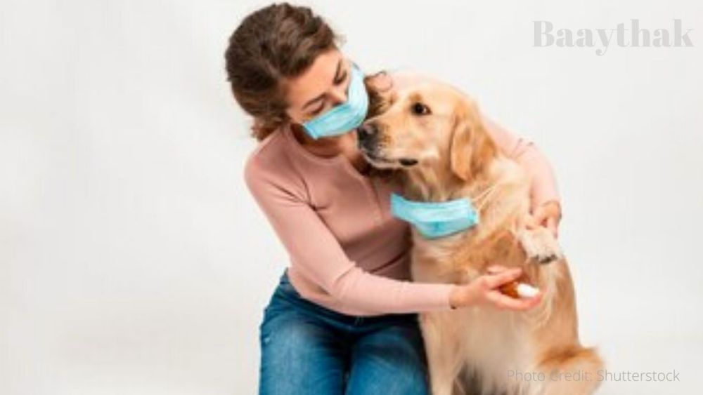 Is a regular sanitizer safe for your pet - Baaythak (3)