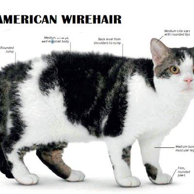 83 Jenis Baka Kucing Yang Ada Di Dunia Comel Comel Belaka