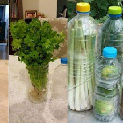 Cara Mudah Simpan Sayur Agar Tahan Lebih Lama Dan Segar